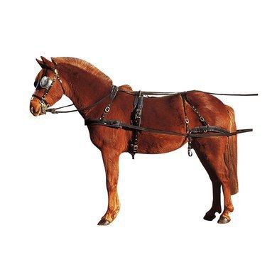 Paarden mennen