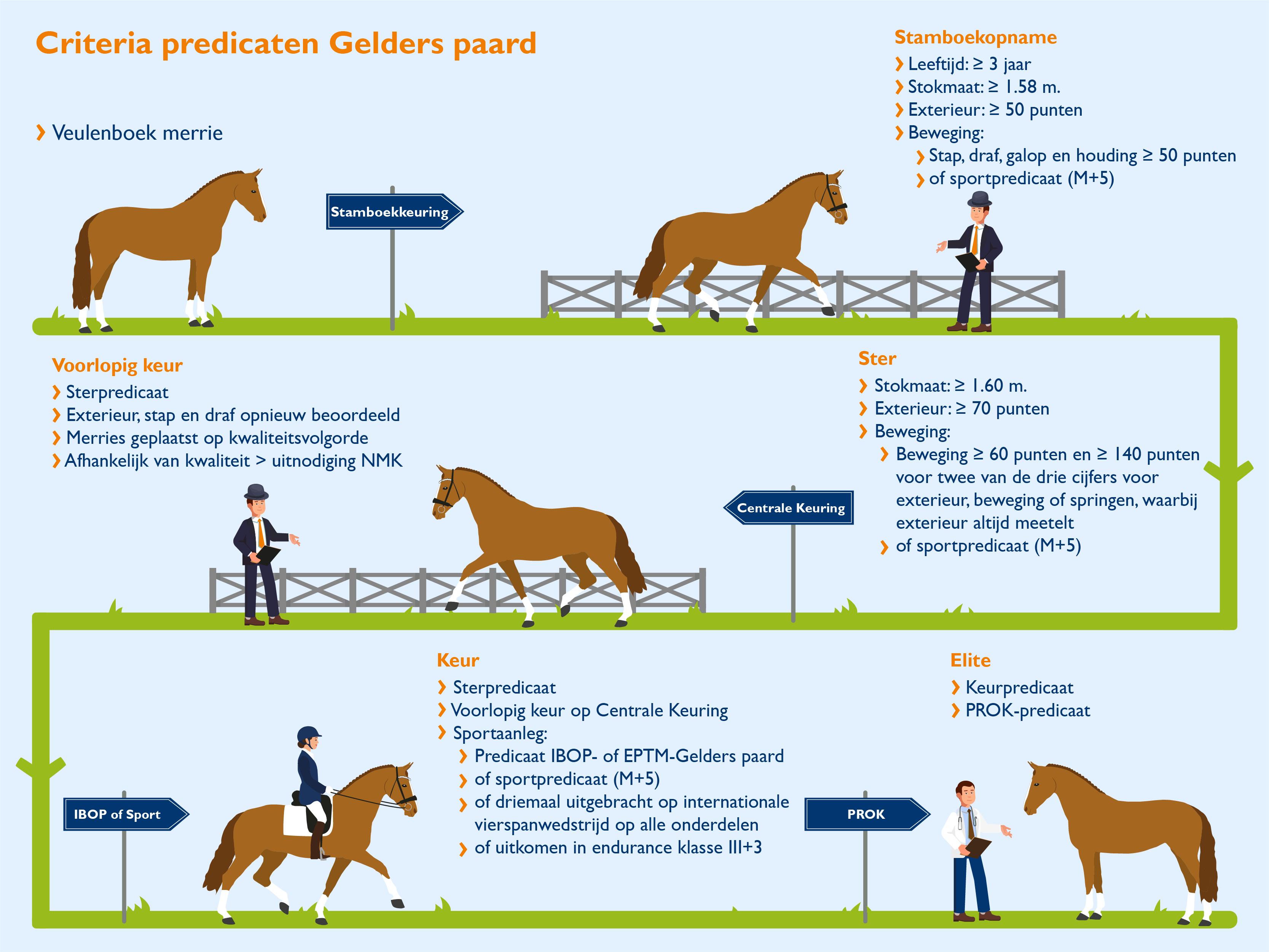 Predicaten Gelders paard_def.png