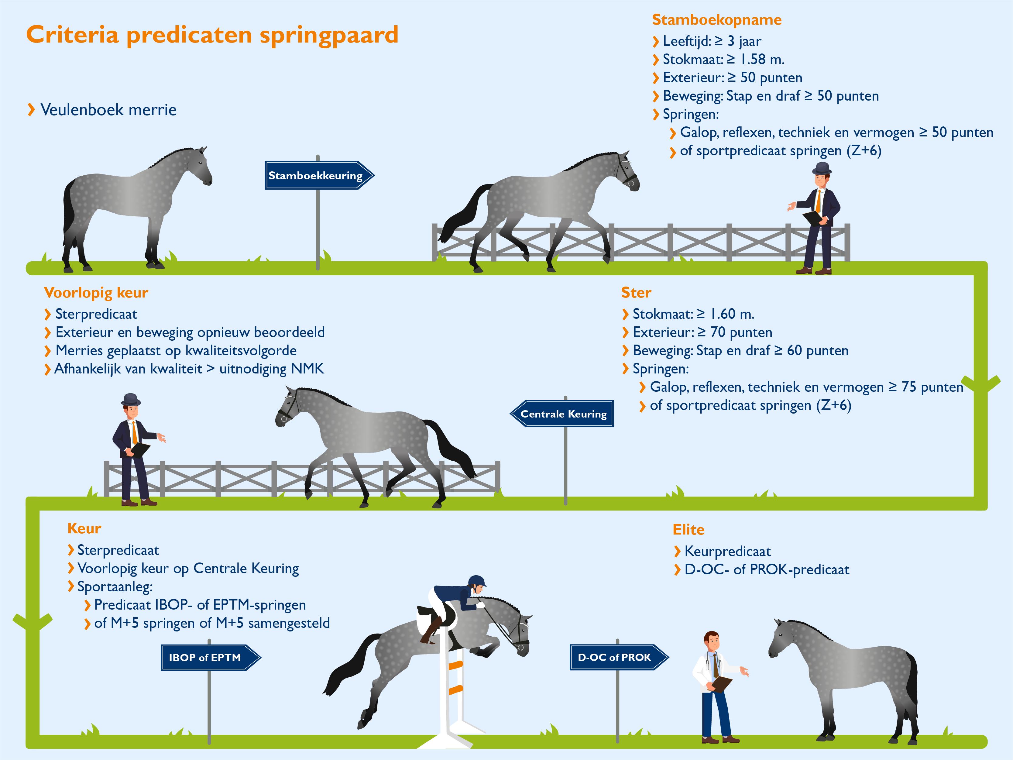 Predicaten Springpaard_def.png