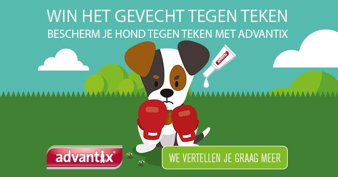 advantix-Homepage.jpg