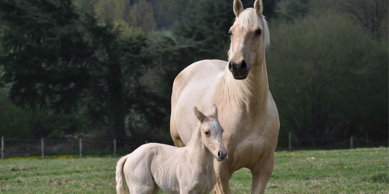 categoriebanner_drogist_paard.jpg