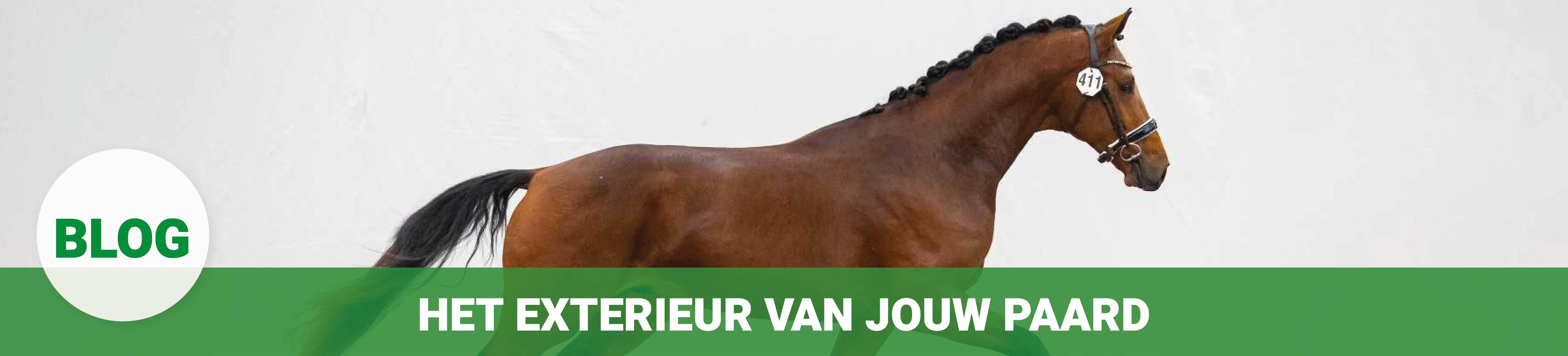 merkenshopbanner_blogs_KWPN_exterieur-paard.jpg